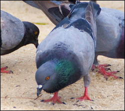 bird removal New York