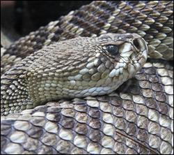 snake removal New York